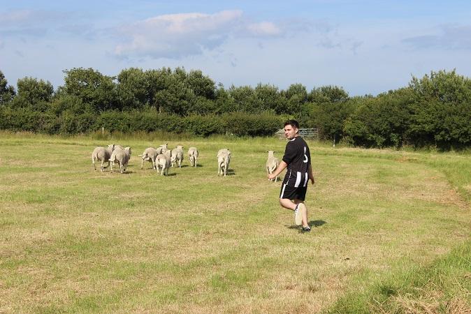 The sheep didn't like me