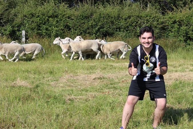 A souvenir sheep snap