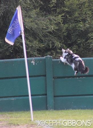 Non League Cats